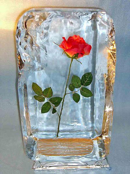Роза во льду на 14 февраля